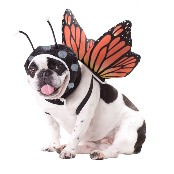 Animal Planet 'Butterfly' Dog Halloween Costume