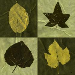 Ankan 'Leaves Chest' Gallery-wrapped Canvas Art