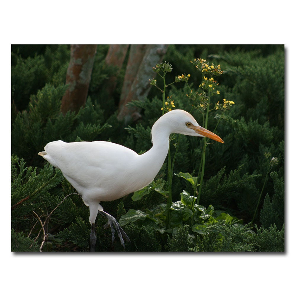 Patty Tuggle 'Egret' Canvas Art (Refurbished)