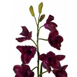 Laura Ashley Burgundy Silk Orchid Planter