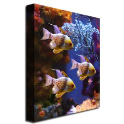 Amy Vangsgard 'Three Pajama Fish' Gallery-Wrapped Canvas Art