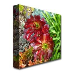 Amy Vangsgard 'Succulent Garden' Canvas Art