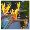 Amy Vangsgard, 'Bird of Paradise Backlit by Sun' Canvas