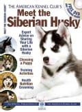 Meet the Siberian Husky (Paperback)