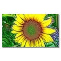 Kathie McCurdy 'Sunflower' Gallery-Wrapped Canvas Art