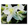 Kathie McCurdy 'White Azalea' Canvas Art