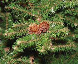 Good Tidings Prince Edward Fir Artificial Prelit 4.5-ft Christmas Tree