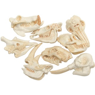 Mammal Skulls Plastic Miniatures In Toobs