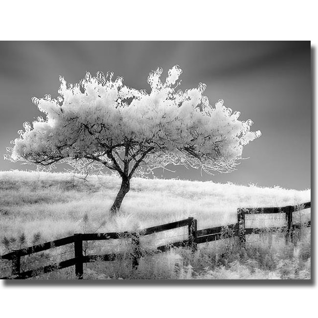 Robert Jones 'Ethereal Tree' Canvas Art