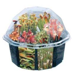Dunecraft Carnivorous Creations Plant Kit
