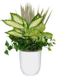 Fantasia White Tropical Planter