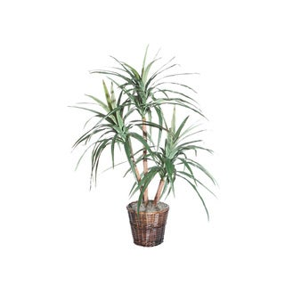 4-foot Marginata Extra Full Decorative Plant