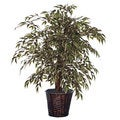 4-foot Variegated Smilax Extra Full Decorative Plant
