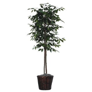 6 foot Ficus Tree Decorative Plant