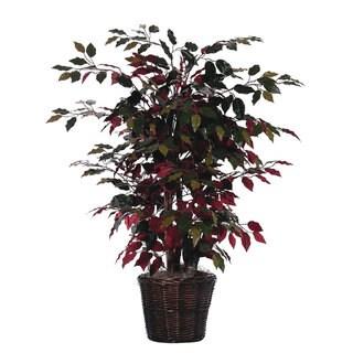 4' Capensia Silk Bush