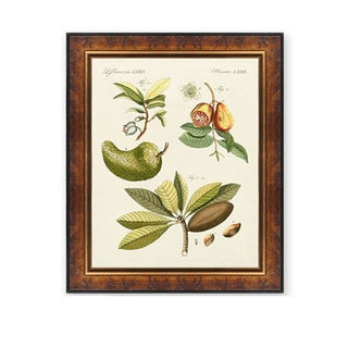 Bertuch 'Breadfruit' Wood Framed Art Print