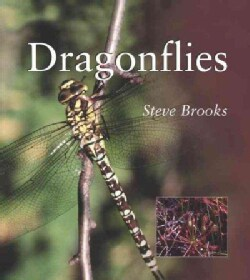 Dragonflies (Paperback)