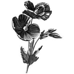 LaBlanche Poppy Silicone Stamp