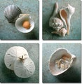 Gayle and Glen Wans 'Scallops, Whelks, Sand Dollars, Shells' 4-piece Canvas Art Set