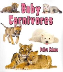Baby Carnivores (Paperback)