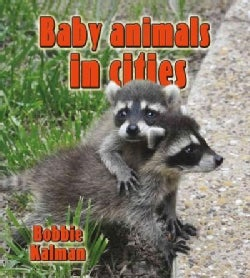 Baby Animals in Cities (Hardcover)