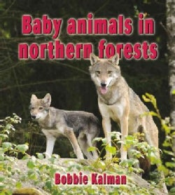 Baby Animals in Northern Forests (Paperback)