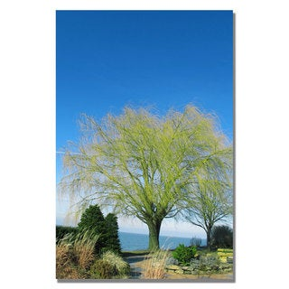 Kathie McCurdy 'Wind to the Willow' Canvas Art