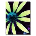 Kathie McCurdy 'Lime Green Coneflower' Canvas Art
