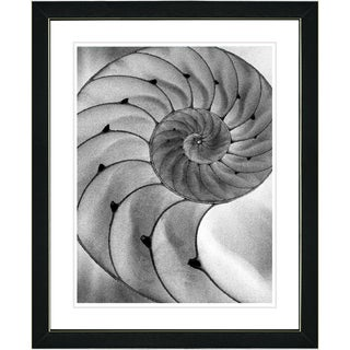 Studio Works Modern 'Cambrian Sea Shell' Framed Print