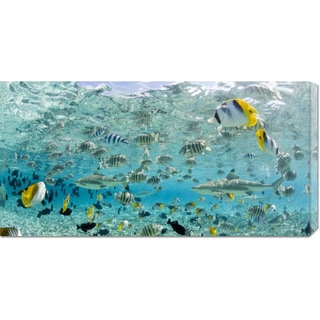 Michele Westmorland 'Blacktip Sharks and Tropical Fish in Bora-Bora Lagoon' Stretched Canvas Art
