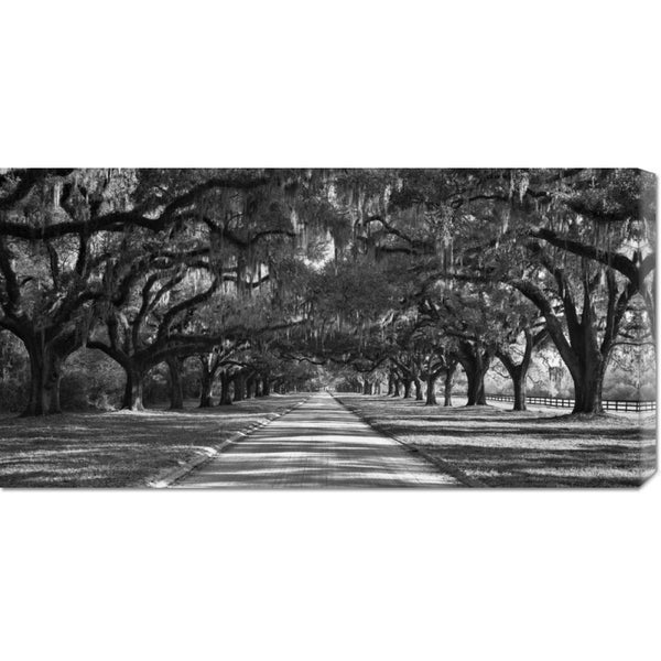 William Manning 'Live Oaks Along Road' Stretched Canvas Art