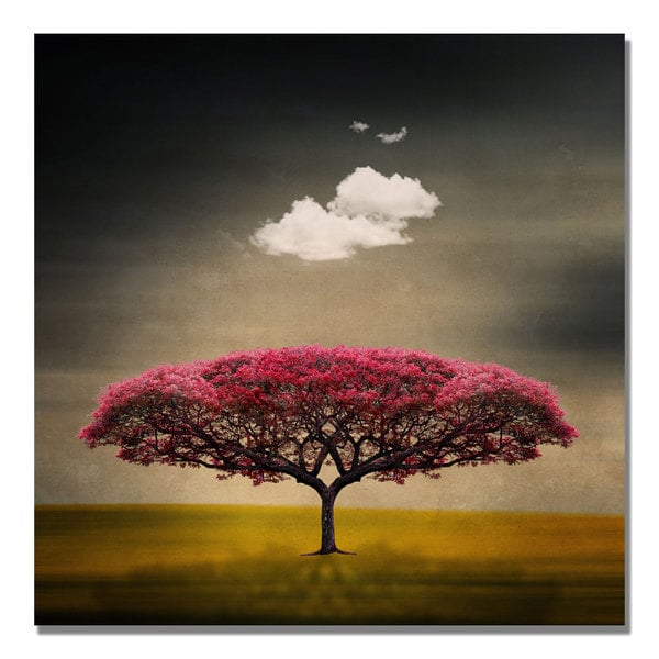 Philippe Sainte-Laudy 'Medusa Cloud' Canvas Art