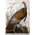 John James Audubon 'Wild Turkey, Male' Stretched Canvas Art