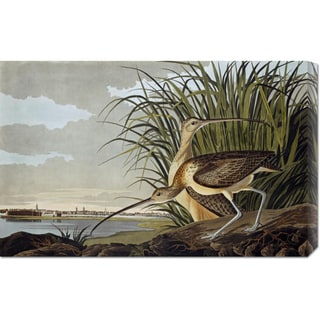 John James Audubon 'Male and Female Long Billed Curlew' Stretched Canvas Art