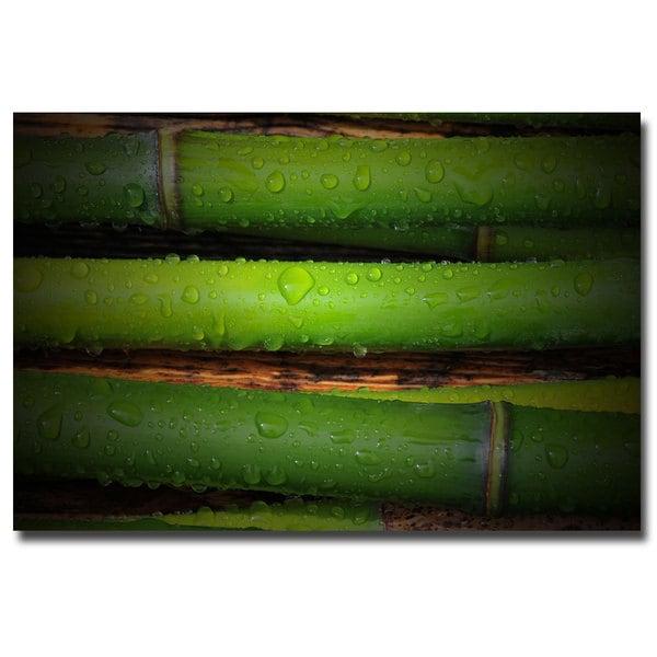 Philippe Sainte Laudy 'Bamboo Drops' Canvas Art