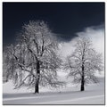 Philippe Sainte-Laudy 'White Nature' Canvas Art