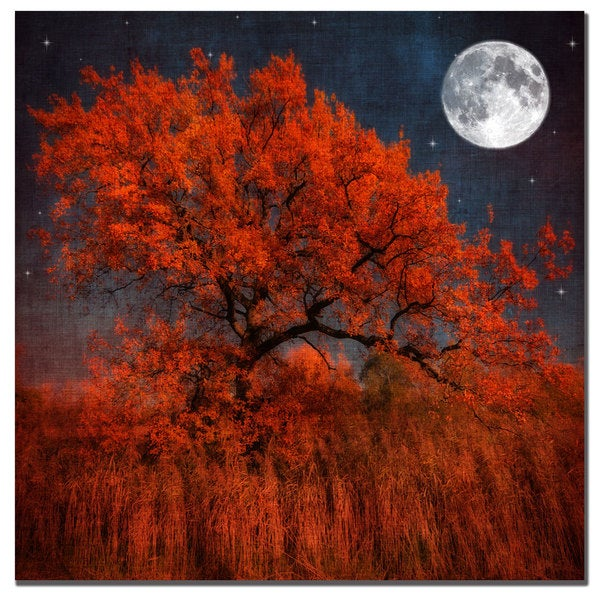 Philippe Sainte-Laudy 'Halloween Color' Canvas Art