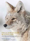 Yellowstone Wildlife: Ecology and Natural History of the Greater Yellowstone Ecosystem (Paperback)