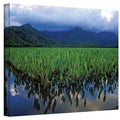 Kathy Yates 'Kauai Taro Field' Canvas Art