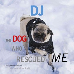 DJ: The Dog Who Rescued Me (Hardcover)