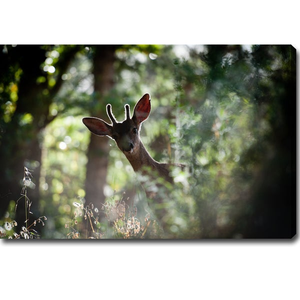 'The Curious Travelling Little Deer' Canvas Art