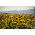 'Sunflower Field' Gallery-wrapped Canvas Art