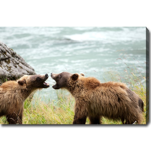 'Sibling Rivalry - Wild Bears of Alaska' Gallery-wrapped Canvas Art