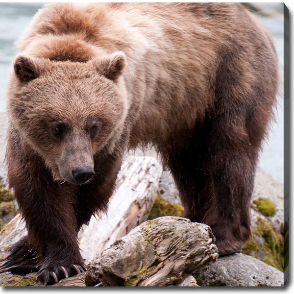 'Hunting - Wild Bears of Alaska' Canvas Art