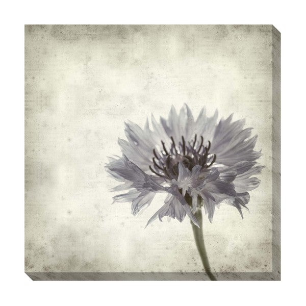 Gallery Direct Floral I Oversized Gallery Wrapped Canvas