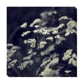 Black & White Floral IV Oversized Gallery Wrapped Canvas