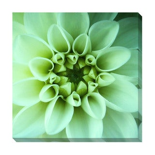 Dahlia in Bloom Oversized Gallery Wrapped Canvas