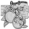 Stampendous Cling Rubber Stamp-Orange Blossom