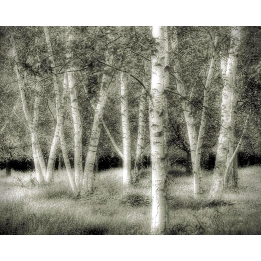 Richard Roffman Birch Forest Gallery wrapped Canvas Art