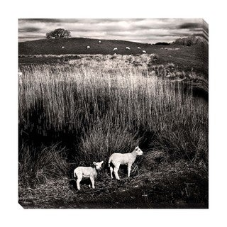 Gallery Direct Lambs Oversized Gallery Wrapped Canvas
